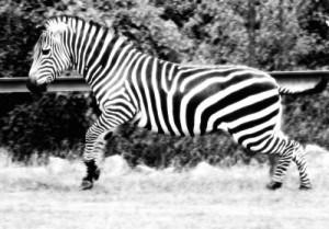 SEO Cloudy Zebra Albany Internet Marketing - Albany SEO